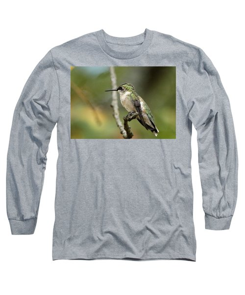 Female Ruby-throated Hummingbird On Branch Long Sleeve T-Shirt by Sheila Brown