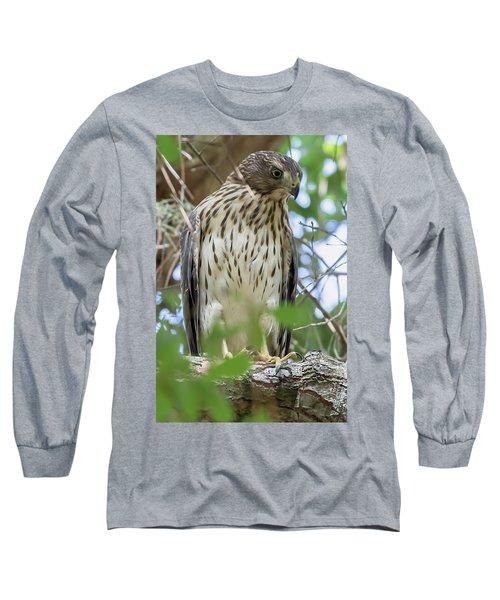 Fledgling Red-shouldered Hawk 2 Long Sleeve T-Shirt