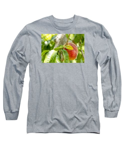 Fresh Peach Hanging In Orchard Long Sleeve T-Shirt