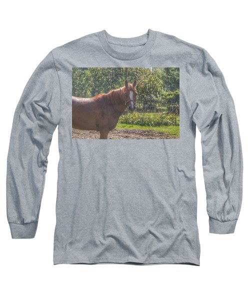 1010 - Froede Roads' Chestnut Brown Long Sleeve T-Shirt