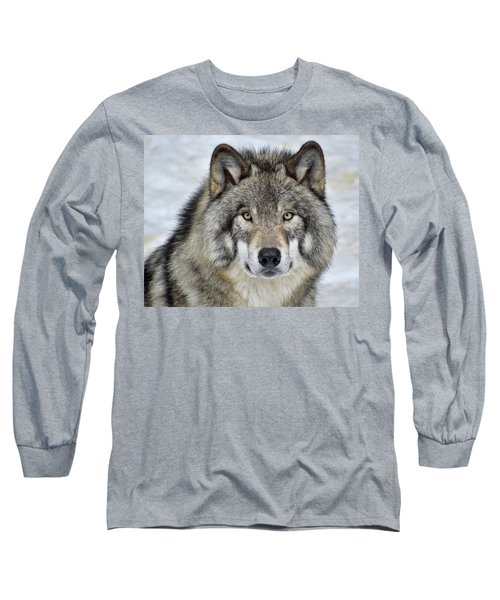Long Sleeve T-Shirt featuring the photograph Full Attention  by Tony Beck