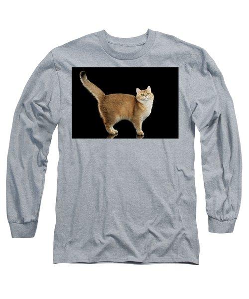 Funny British Cat Golden Color Of Fur Long Sleeve T-Shirt