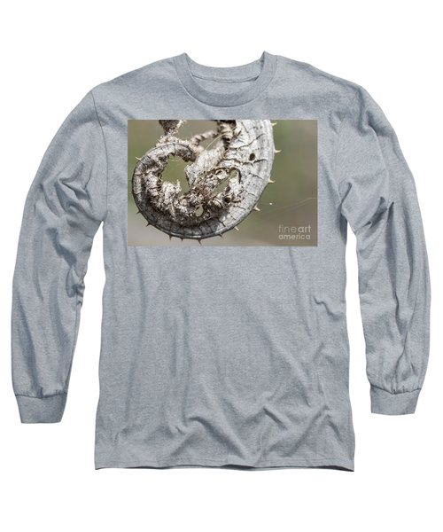 Long Sleeve T-Shirt featuring the photograph Furrow Orb Weaver On A Dry Thisle Leaf by Jivko Nakev