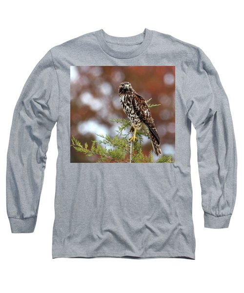 Red Shoulder Hawk Looking At Me Long Sleeve T-Shirt