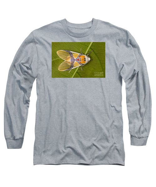 Long Sleeve T-Shirt featuring the photograph Idalus Carinosa Moth by Gabor Pozsgai