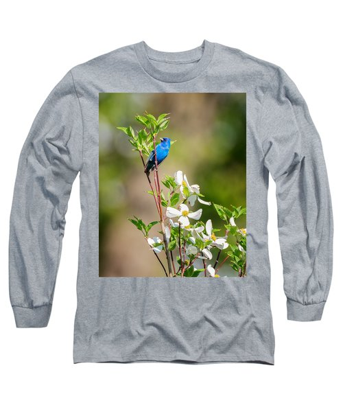 Indigo Bunting In Flowering Dogwood Long Sleeve T-Shirt by Bill Wakeley