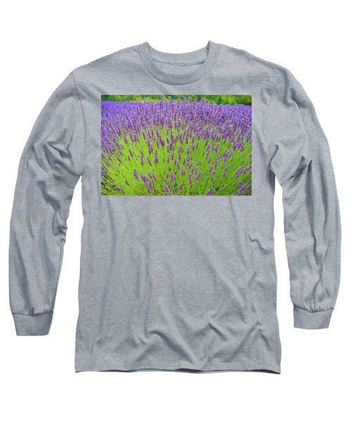 Lavender Gathering Long Sleeve T-Shirt by Ken Stanback