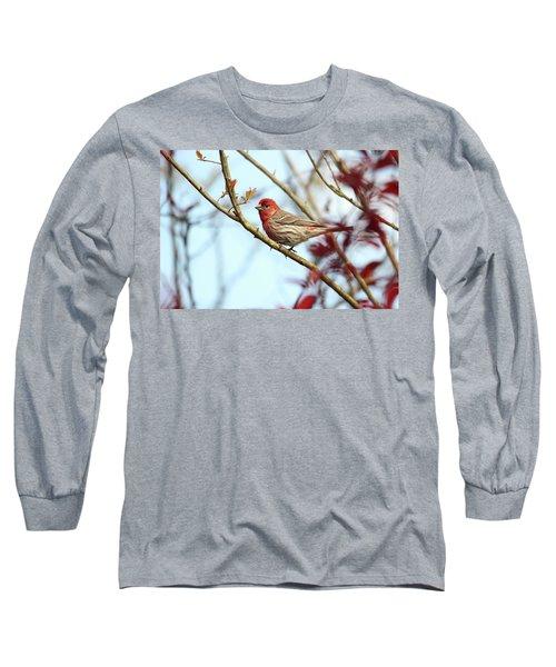 Little Finch Long Sleeve T-Shirt by Trina Ansel