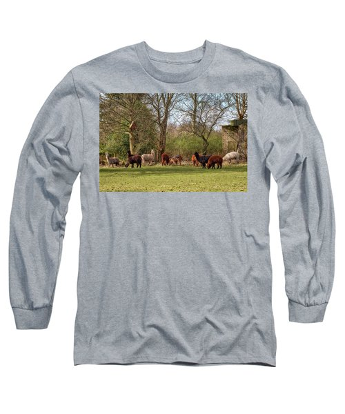 Long Sleeve T-Shirt featuring the photograph Alpacas In Scotland by Jeremy Lavender Photography