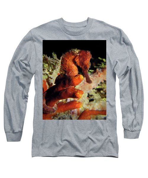 Longsnout Seahorse, St. Croix, U.s. Virgin Islands 2 Long Sleeve T-Shirt