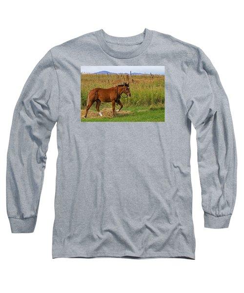 Lunch Break Long Sleeve T-Shirt by Alana Thrower