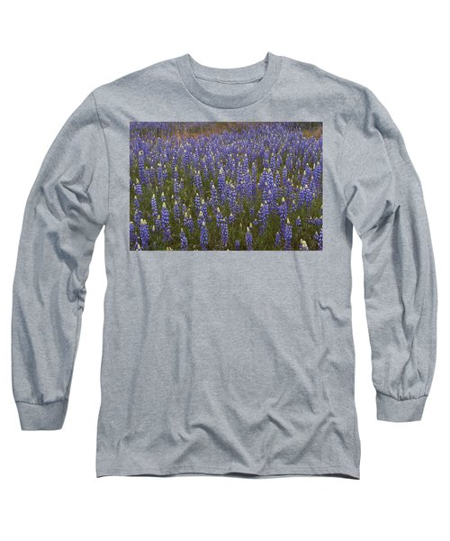 Lupines Long Sleeve T-Shirt by Doug Herr