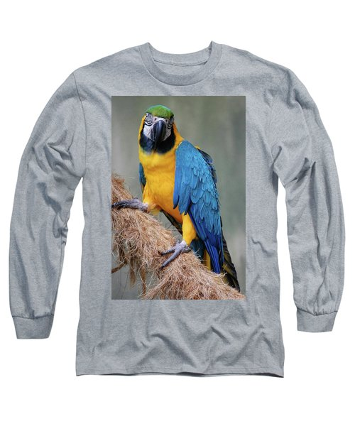 Magnificent Macaw Long Sleeve T-Shirt by DigiArt Diaries by Vicky B Fuller