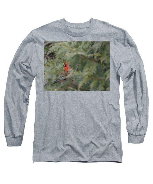 Male Cardinal Seeking Shelter Long Sleeve T-Shirt