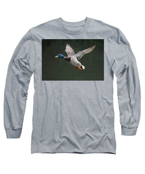 Mallard Drake In Flight Long Sleeve T-Shirt