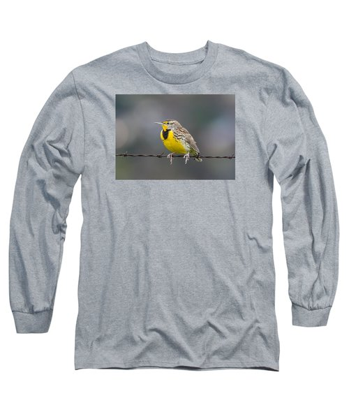 Meadowlark On Barbed Wire Long Sleeve T-Shirt by Marc Crumpler