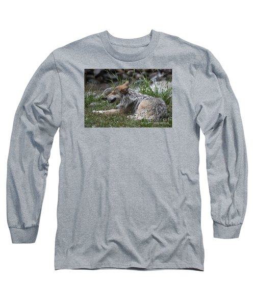 Long Sleeve T-Shirt featuring the photograph Mexican Wolf 20120714_112a by Tina Hopkins