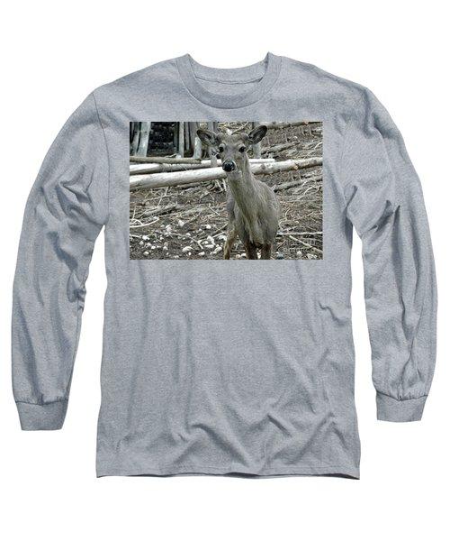 Long Sleeve T-Shirt featuring the photograph Michigan White Tail Deer by LeeAnn McLaneGoetz McLaneGoetzStudioLLCcom