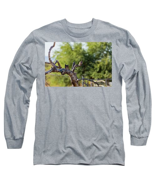 Mourning Dove In Old Tree Long Sleeve T-Shirt