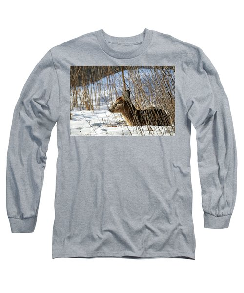 Napping Fawn Long Sleeve T-Shirt by Brook Burling
