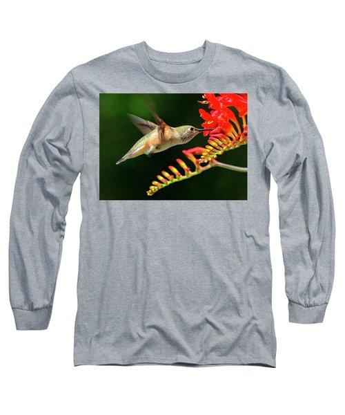 Nectar Time Long Sleeve T-Shirt by Sheldon Bilsker