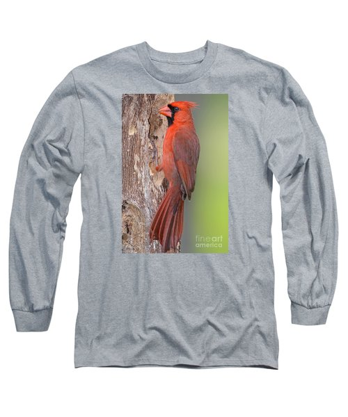 Northern Cardinal Male Long Sleeve T-Shirt by Bonnie Barry