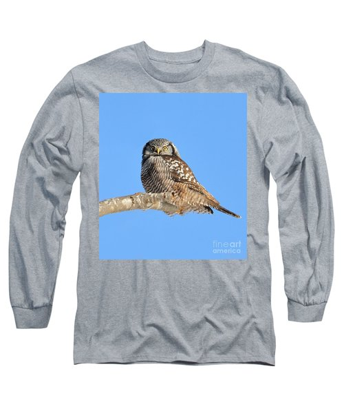 Northern Hawk-owl On Limb Long Sleeve T-Shirt by Debbie Stahre
