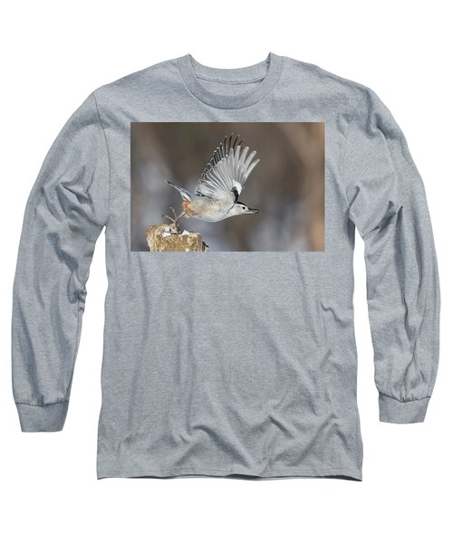 Long Sleeve T-Shirt featuring the photograph Nuthatch In Action by Mircea Costina Photography