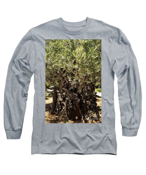 Long Sleeve T-Shirt featuring the photograph Olive Tree by Mae Wertz
