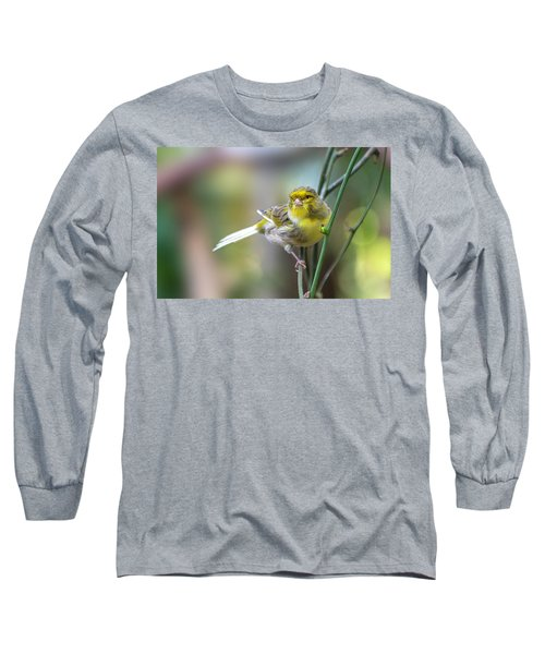 Orchard Oriole Long Sleeve T-Shirt