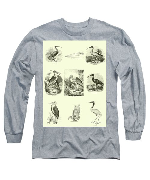 Page From The Pictorial Museum Of Animated Nature  Long Sleeve T-Shirt by English School