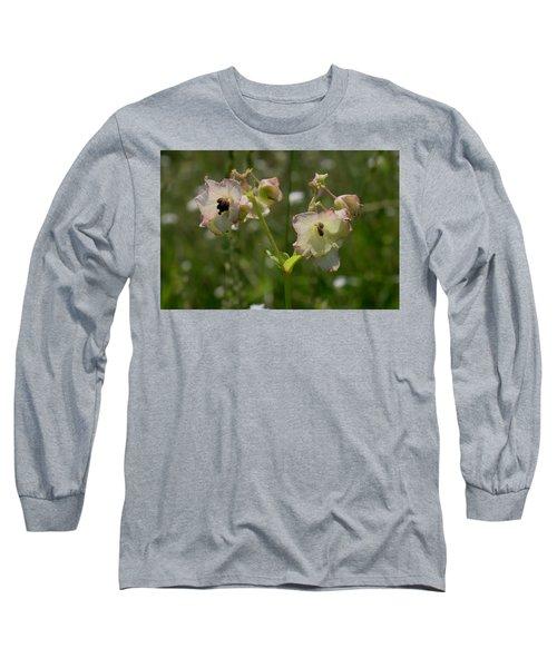 Pale Umbrella Wort Long Sleeve T-Shirt
