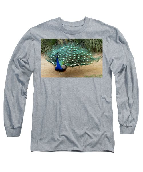 Peacock Showing All Feathers Long Sleeve T-Shirt by Patricia Barmatz