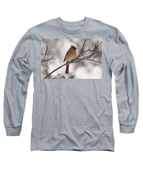 Perched Female Red Cardinal Long Sleeve T-Shirt by Debbie Oppermann