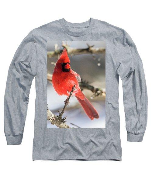 Perching Mister Cardinal Long Sleeve T-Shirt