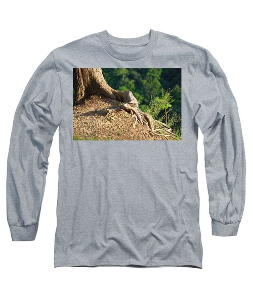 Picture Of A Tree On A Ledge Long Sleeve T-Shirt