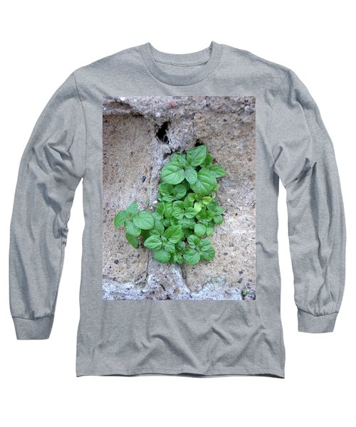 Plant In Stone Naples Italy Long Sleeve T-Shirt