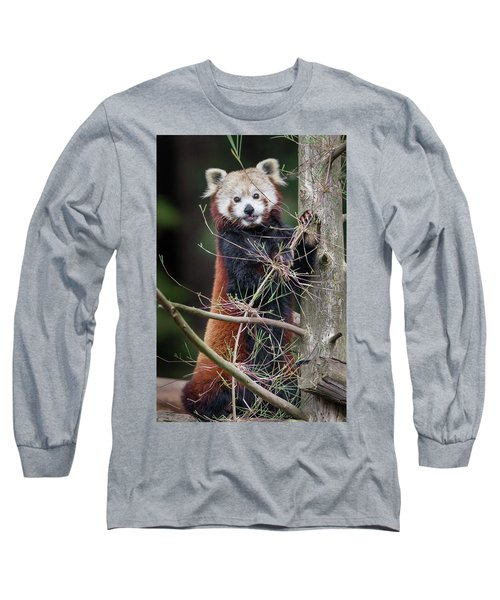 Portrat Of A Content Red Panda Long Sleeve T-Shirt by Greg Nyquist