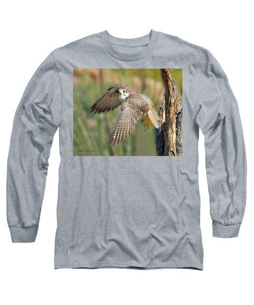 Prairie Falcon Taking Flight Long Sleeve T-Shirt