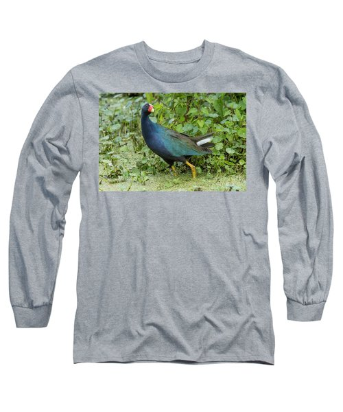 Purple Gallineulle Long Sleeve T-Shirt
