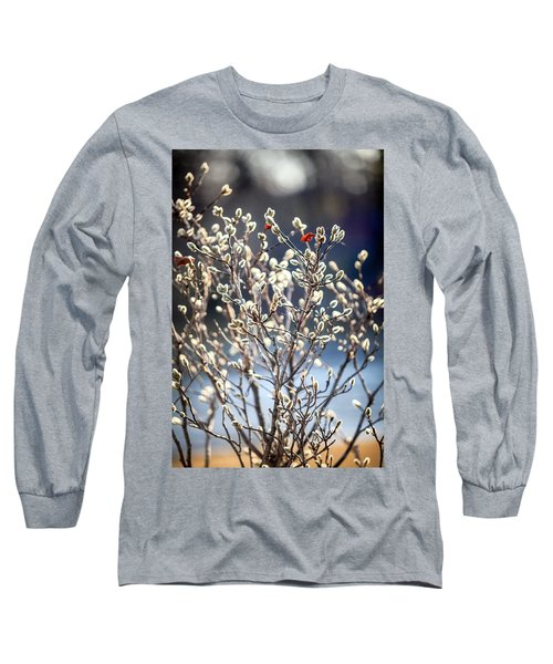Pussy Willow Long Sleeve T-Shirt by Robert Clifford