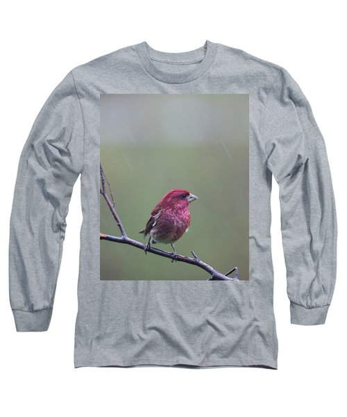 Long Sleeve T-Shirt featuring the photograph Rainy Day Finch by Susan Capuano