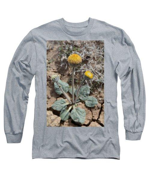 Long Sleeve T-Shirt featuring the photograph Rayless Daisy by Jenessa Rahn