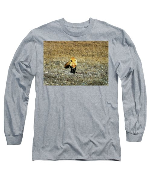 Long Sleeve T-Shirt featuring the photograph Red Fox On The Tundra by Anthony Jones