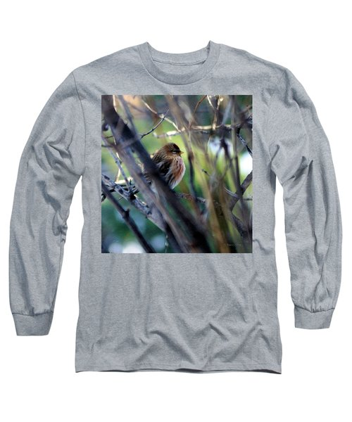 Red Poll, Resting Long Sleeve T-Shirt
