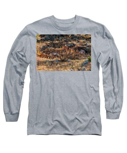 Rocky Mountain National Park Deer Colorado Long Sleeve T-Shirt