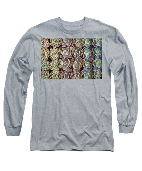 Rows Of Succulents  Long Sleeve T-Shirt by Catherine Lau