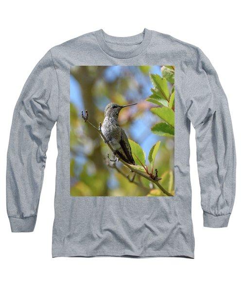 Rufous Hummingbird Long Sleeve T-Shirt by Keith Boone