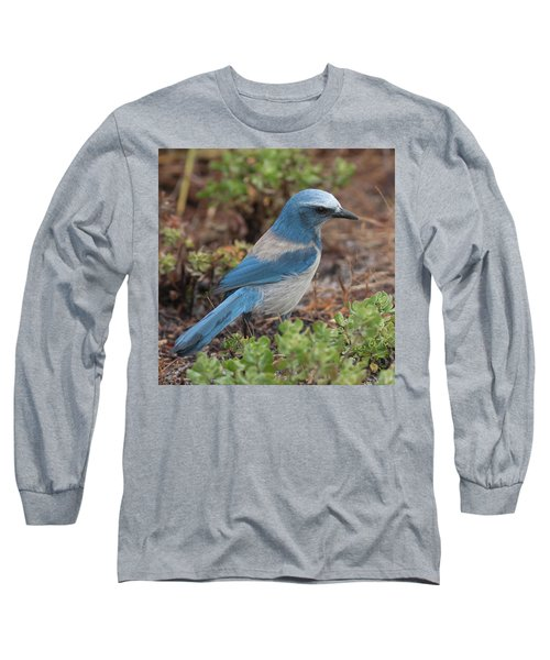 Scrub Jay Framed In Green Long Sleeve T-Shirt