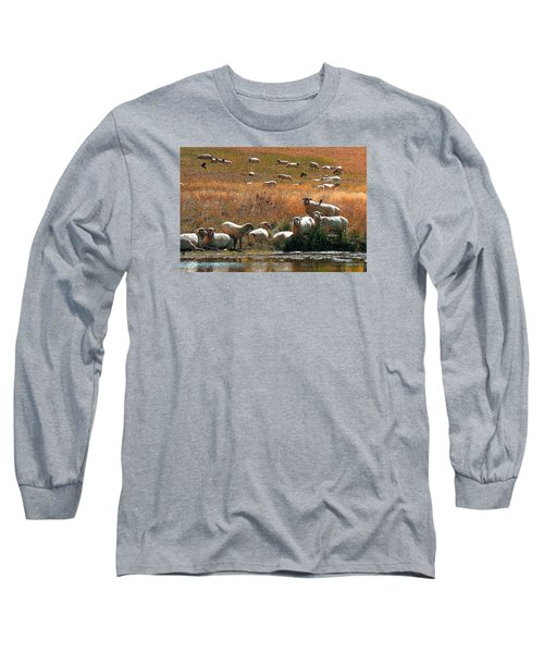 Sheep Country Long Sleeve T-Shirt